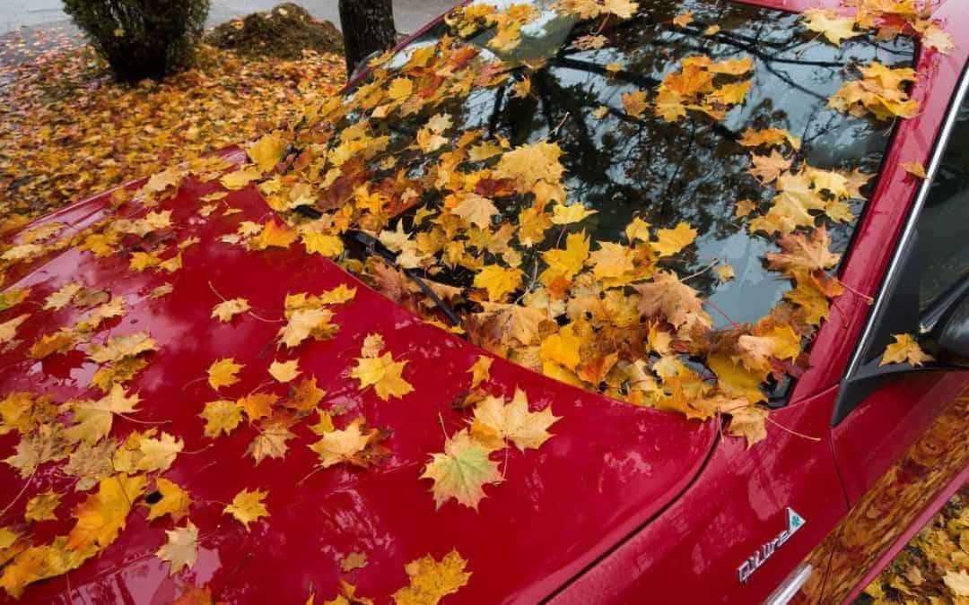 5 große Tücken des Herbstes und wie Autofahrer ihnen entgegenwirken