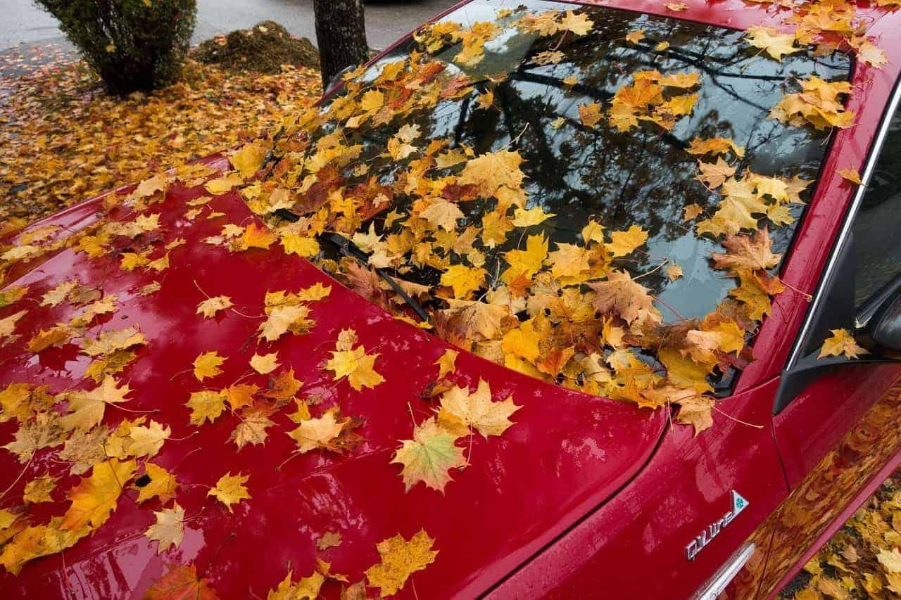Auto von Laub bedeckt